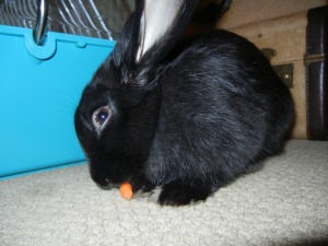 Intensely Eating a Baby Carrot