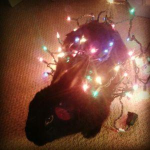 Pup is lit.