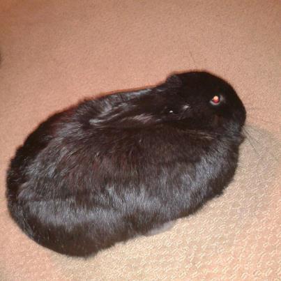 egg shape