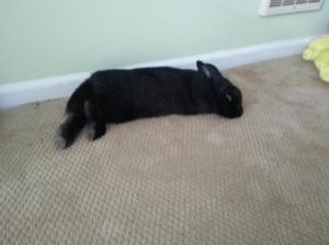 Bunny FLOP.