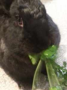 Happily Eating Parsley