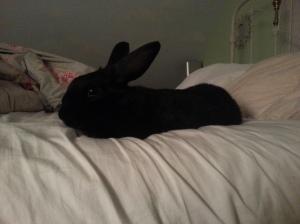Takin' Ova the Bed