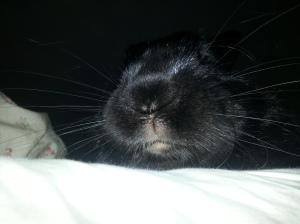 Bunny Mouf