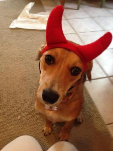 An innocent looking devil.