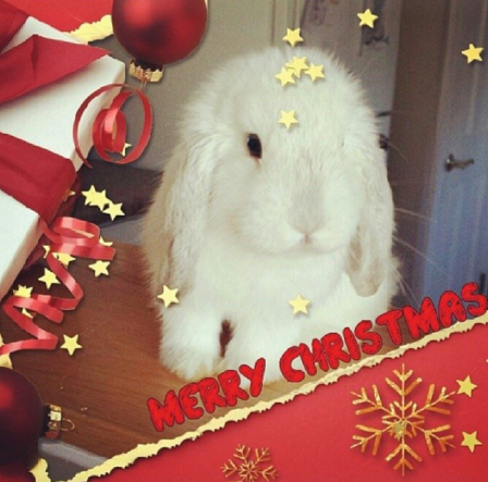 Merry Christmas! Love, Nibbles