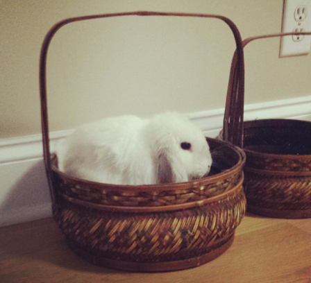 Ever seen anything cuter than a bunny in a basket?