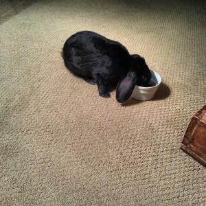 Hiding in my food bowl.