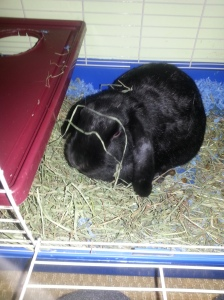 She loves her hay so much, she just dives right in. She doesn't care that it's all over her.