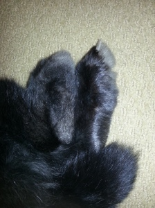 I kissed these super fluffy feet last night.