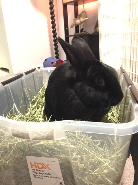 """""""More timothy hay, please!"""""""